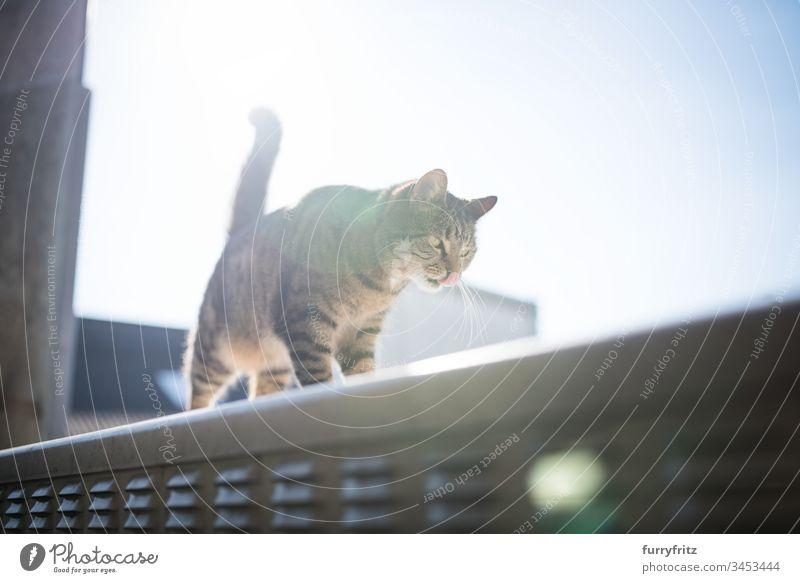 Katze auf einem Strom Kasten im Sonnenlicht im Freien Blendenfleck Textfreiraum tierisches Auge Tierhaare Blauer Himmel Bokeh Hauskatze Erkundung katzenhaft
