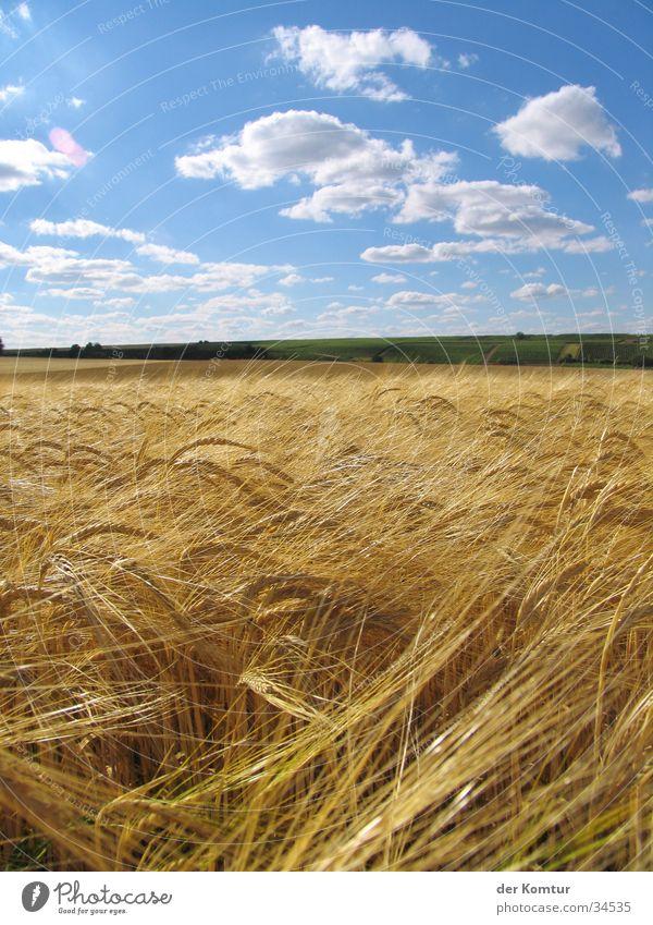 Weites Land soweit das Auge reicht... Sommer ruhig Wolken Ferne Idylle Kornfeld