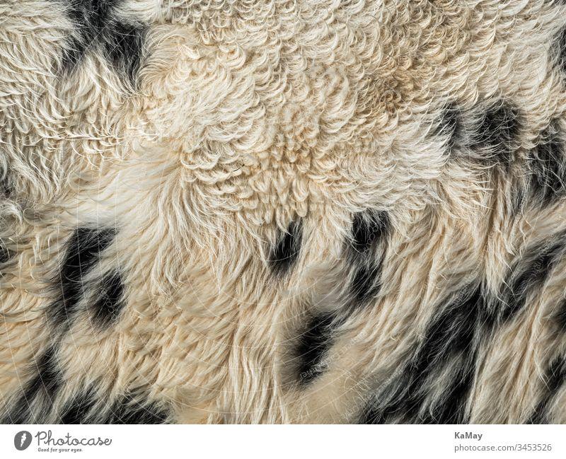 Fell von Kuh Rind als Hintergrund Kuhfell Tierfell schwarzweiß gefleckt Natur natürlich background Struktur Textur abstrakt Vollbild horizontal Farbfoto