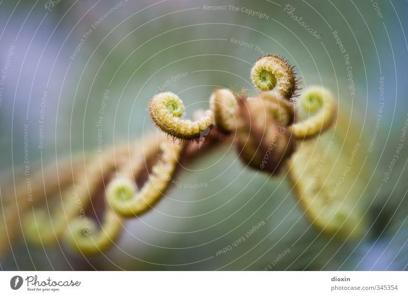 77º Farnheit Natur Pflanze Blatt Umwelt natürlich Wachstum nah Grünpflanze