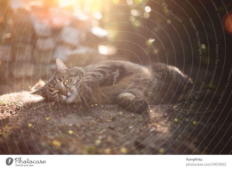 Katze wälzt sich im Dreck im Freien rollierend Schmutz in die Kamera schauen bezaubernd Tierverhalten tierisches Auge Tierhaare Bokeh Kühlung bequem niedlich