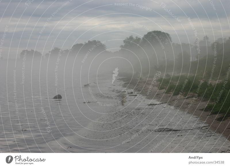 Skane_Küste Wasser Strand Landschaft Küste Nebel Ostsee mystisch Schweden