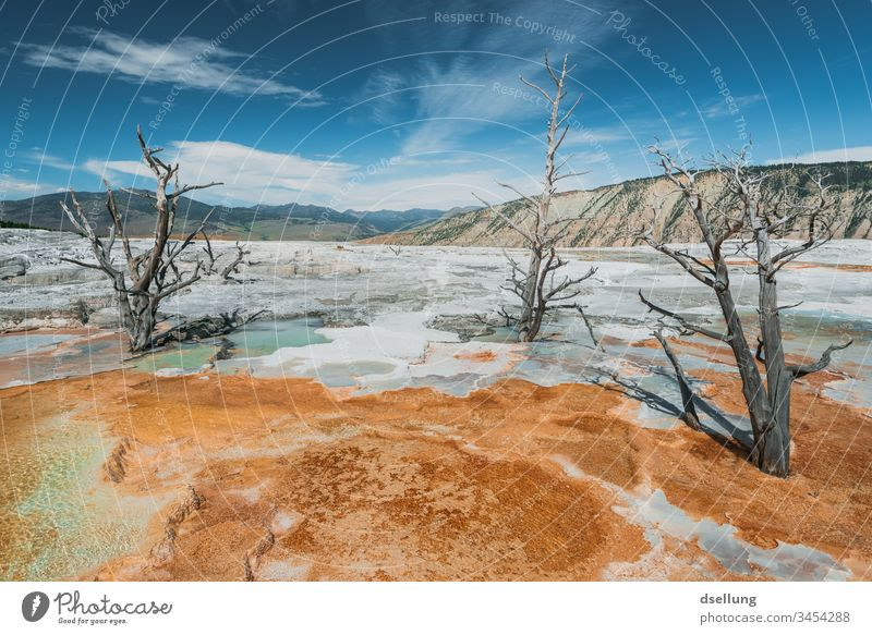 Abgestorbene Bäume im Yellowstone Nationalpark erwärmen Eruption thermisch Vulkan Wahrzeichen Tourismus Wald Pool Geologie Becken Schönheit farbenfroh Frühling