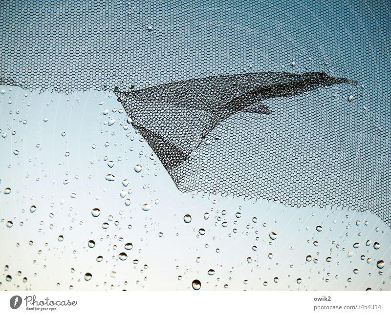 Flügelwesen Fenster Fensterscheibe Gaze Fliegengitter Glas Kunststoff Wasser Wassertropfen Regen Regentropfen viel klein nah winzig flattern schadhaft zerfetzt