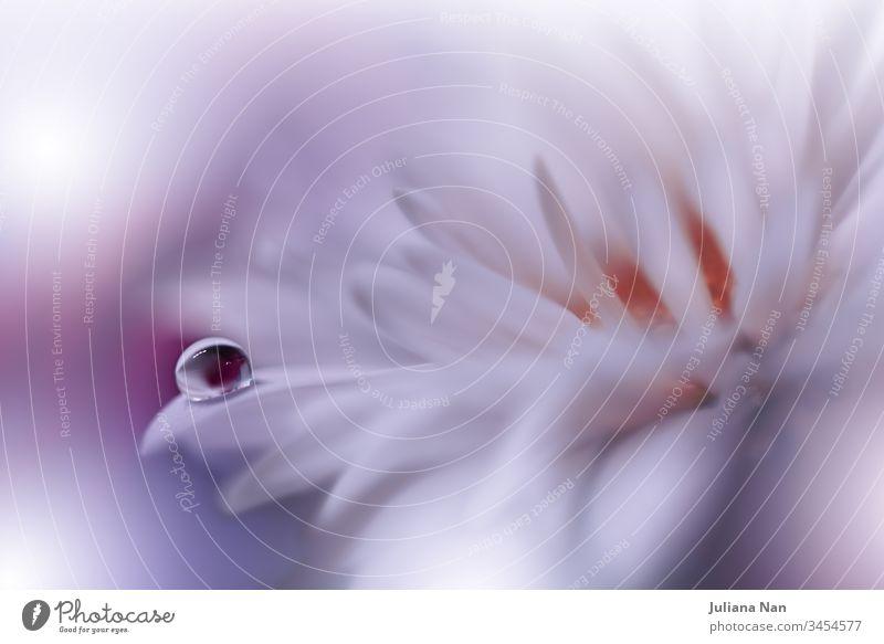 Schöner Naturhintergrund.Florales Kunstdesign.Abstrakte Makrofotografie.Weiße Gänseblümchen.Pastellblumen.Weißer Hintergrund.Kreative künstlerische Tapete.Hochzeit Einladung.Feier,Liebe.Nahaufnahme.Fröhliche Feiertage.Weiße Farbe.Kopierraum.