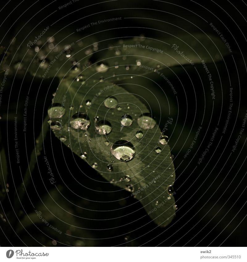 Regennacht Umwelt Natur Pflanze Wasser Wassertropfen Klima Wetter schlechtes Wetter Blatt Wiese dunkel nah nass natürlich dunkelgrün perlen leuchten glänzend