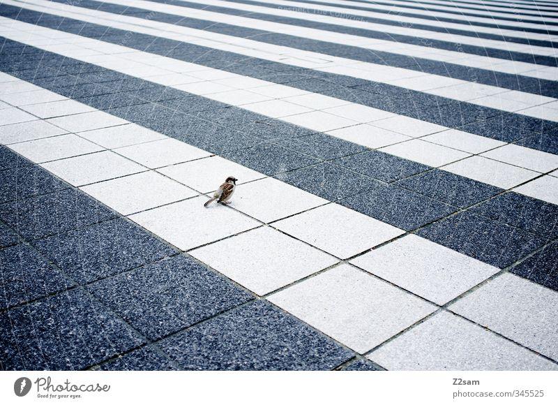 vogi Stadt Platz Architektur Vogel sitzen einfach kalt klein modern Neugier niedlich blau selbstbewußt Gelassenheit ruhig Einsamkeit elegant Mittelpunkt