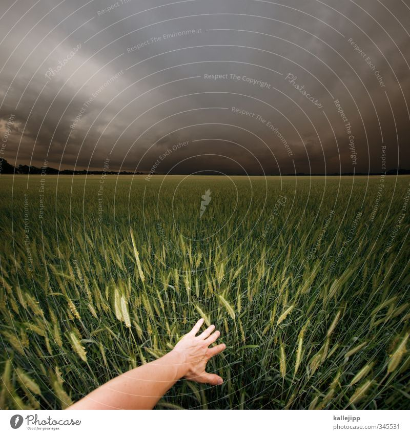 die reifeprüfung Mensch Himmel Natur grün Pflanze Hand Landschaft Tier Umwelt Leben Horizont Lebensmittel Feld Arme Erfolg Wachstum