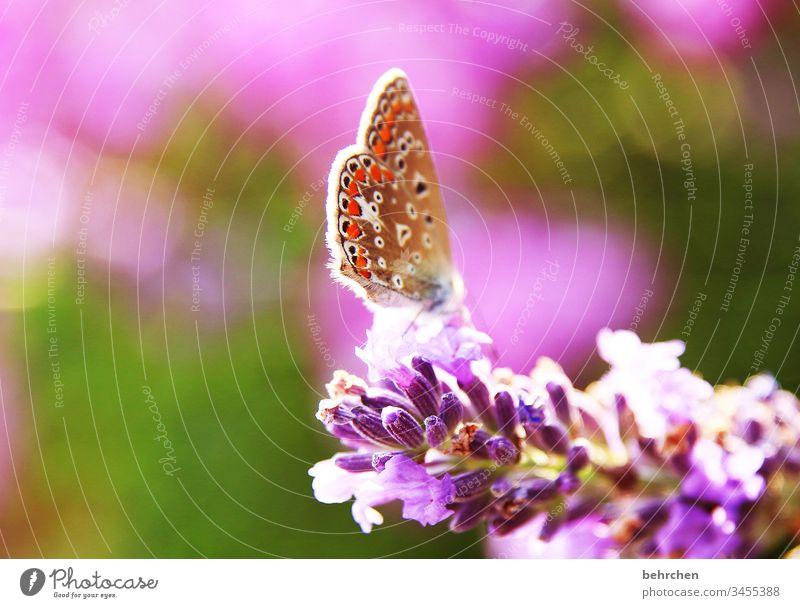 federleicht Tierporträt Unschärfe Sonnenlicht Menschenleer Nahaufnahme Farbfoto Schweben Nektar Pollen schön exotisch elegant außergewöhnlich Fressen fliegen