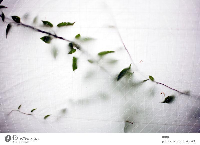 Wucher Sommer Pflanze Blatt Frühling Zeit Wachstum Dach Vergänglichkeit Wandel & Veränderung Kunststoff Grünpflanze Abdeckung Ranke bewachsen Wildpflanze