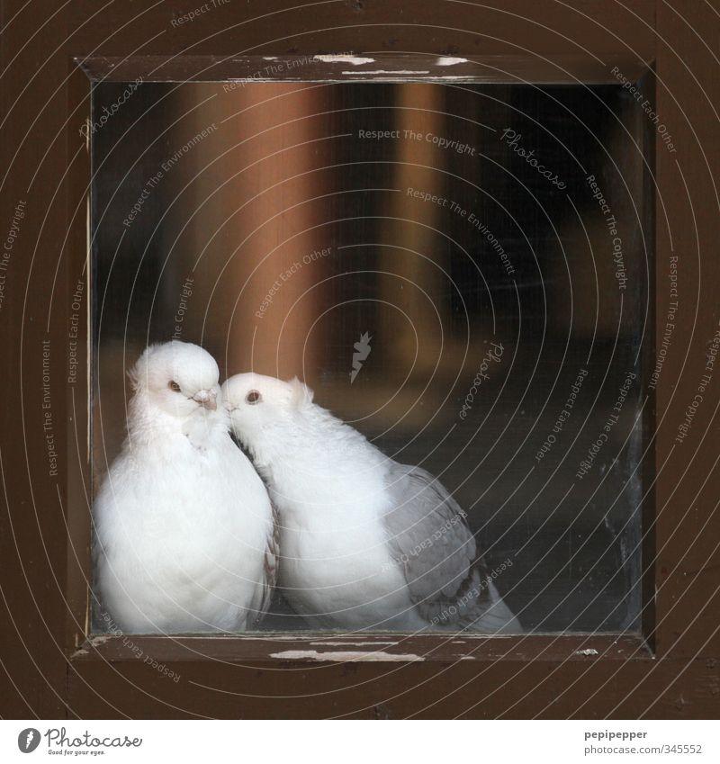 tierliebe Tier Fenster Liebe Gefühle Holz Glück Freundschaft Vogel Zusammensein Tierpaar Glas Flügel Schutz Fell Tiergesicht Küssen