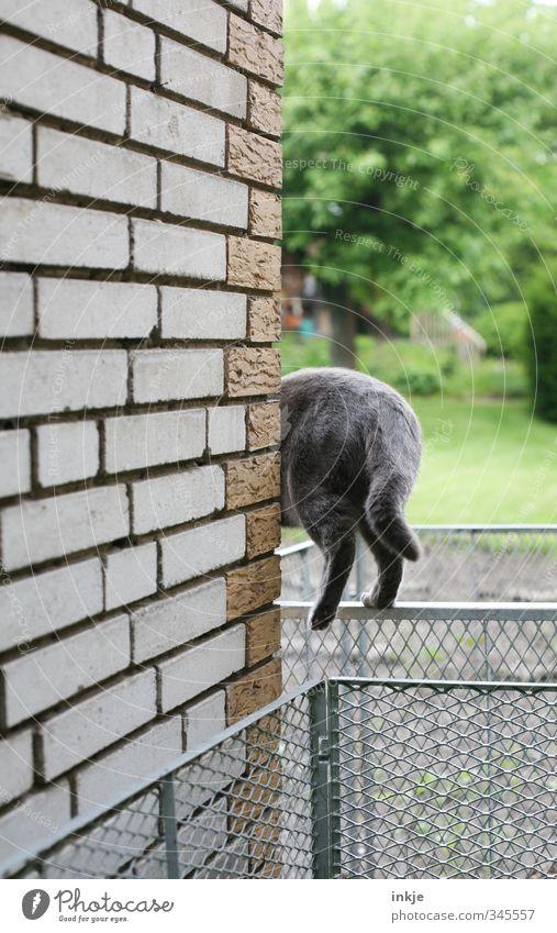 Kein Weg ist zu schwierig,... Katze Natur Sommer Baum Tier Umwelt Wand Gras Frühling Wege & Pfade Mauer Stein Garten Metall gehen Geschwindigkeit