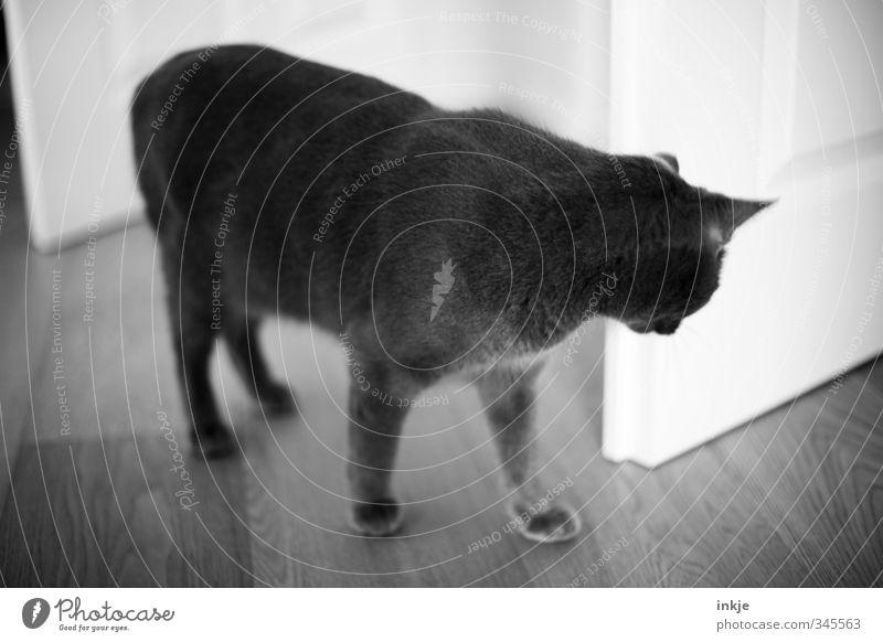 weg isser.... Katze Tier Gefühle Spielen Stimmung Raum Wohnung Tür Freizeit & Hobby warten Häusliches Leben stehen niedlich beobachten Suche Neugier
