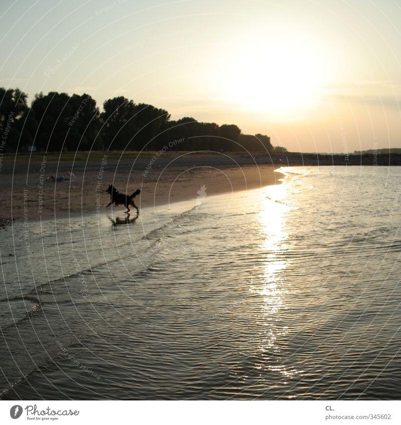 sommeranfang Natur Landschaft Wasser Himmel Sonne Sonnenaufgang Sonnenuntergang Sonnenlicht Sommer Wetter Schönes Wetter Wärme Flussufer Strand Tier Hund 1