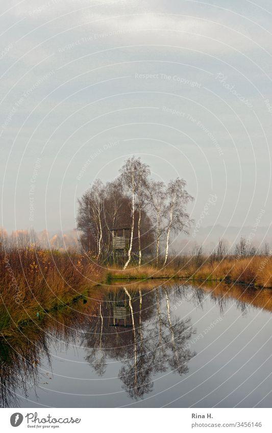 Hochsitz im Frühnebel Moor Landschaft Nebel Wasser See Baum Birken Winter Herbst Farbfoto Umwelt Reflexion & Spiegelung Himmel ruhig Teich Seeufer Pflanze Sumpf