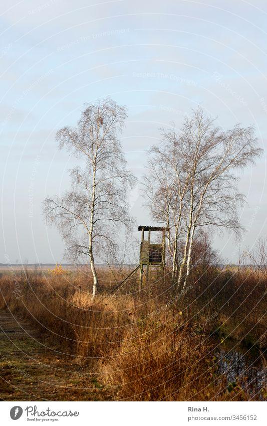 Hochsitz im Herbst Landschaft Moor Birken Winter Außenaufnahme Baum Natur Umwelt Gräser Himmel Horizont