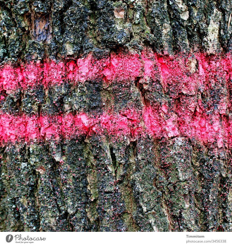 Baummarkierung - Rückegasse Rinde Markierung Holz Wald Natur braun Muster pink Umwelt Nutzholz