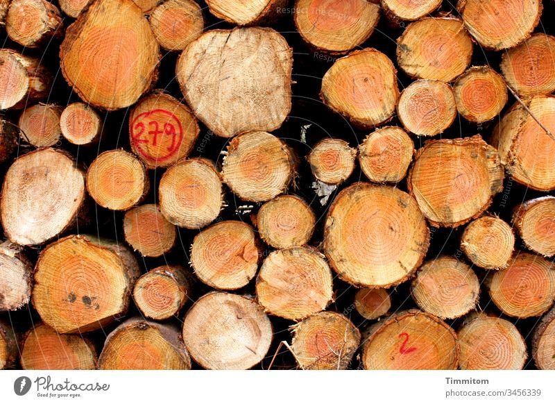 Holzpolter Nr. 279 Baumstämme Rinde Schnittstelle Jahresringe Baumstamm Waldwirtschaft Stapel Natur Holzstapel Forstwirtschaft Menschenleer