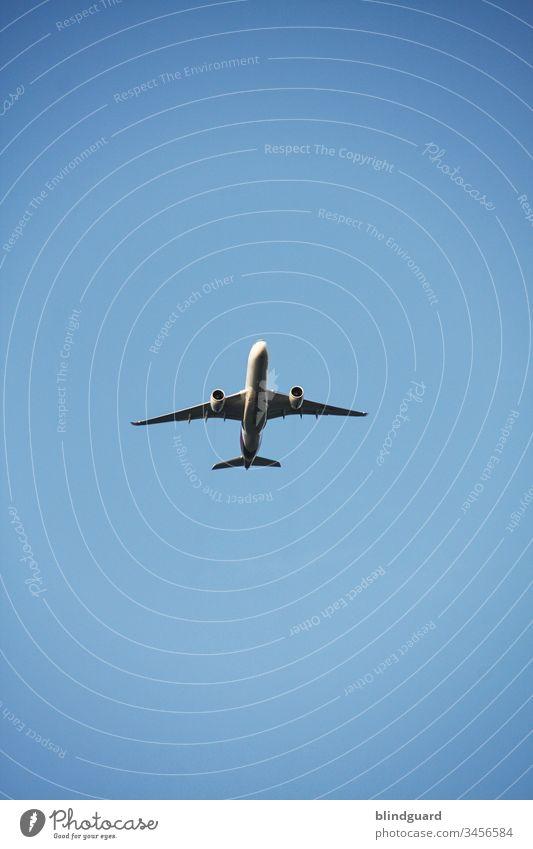 Lockdown is over ... nix wie weg ... nur wohin? Flugzeug Fernverkehr Himmel Tragfläche blau Passagierflugzeug Ferien & Urlaub & Reisen Tourismus fliegen