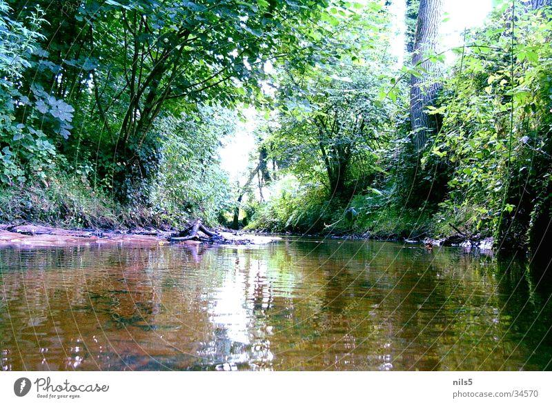 Damals am Bach Wald grün Wasserspiegelung Baum Wegrand Natur Fluss Küste Landschaft Idylle Pflanze