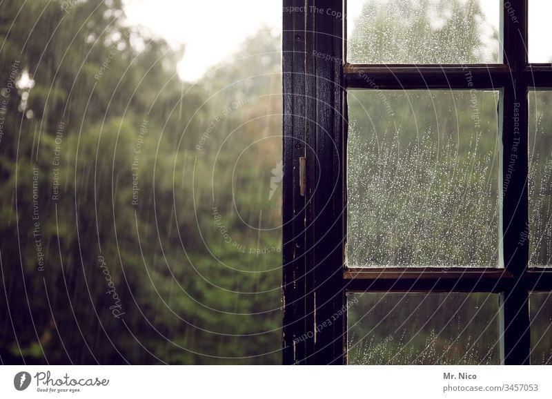 regnerisch Regen Wassertropfen nass feucht Herbst Wetter Fenster Fensterscheibe schlechtes Wetter Traurigkeit Blick aus dem Fenster Holzfenster Baum Garten