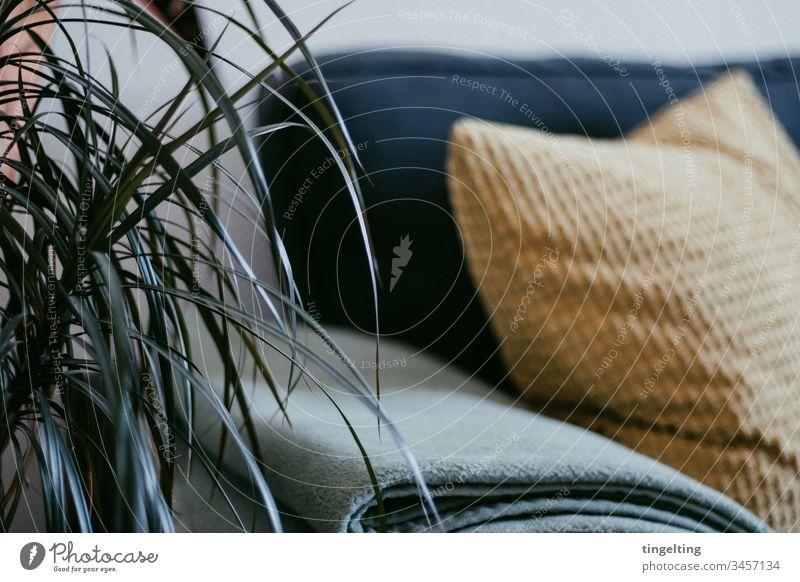 Palme Im Wohnzimmer wohnzimmer pflanze palme couch decke kissen interior einrichtung zuhause dekoration palmenblätter senfgelb grün mint grau anthrazit
