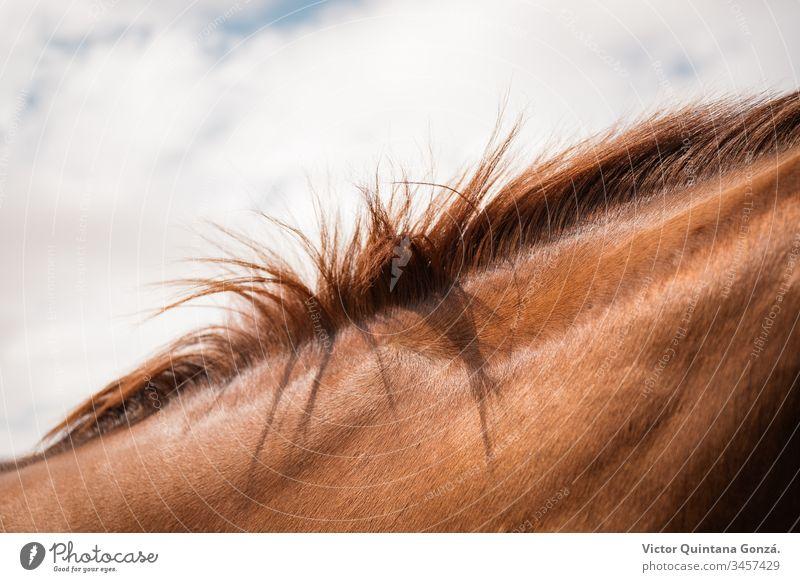 Rosshaar Detail agrar landwirtschaftlich Tier Hinterwälder bukolisch Kavallerie Detailaufnahme Europa Mode Fell Glamour Gras Behaarung Frisur idyllisch