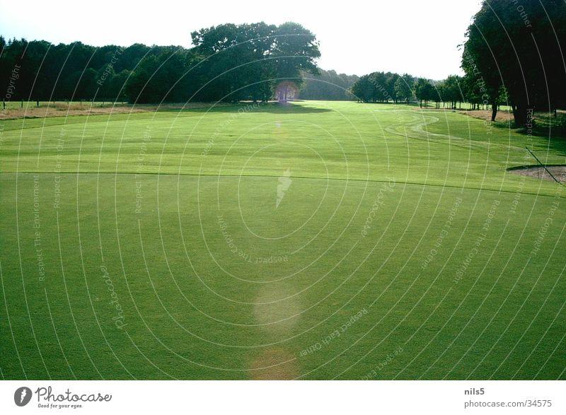 Sommertag grün Licht Platz Sport hell Sonne Golf