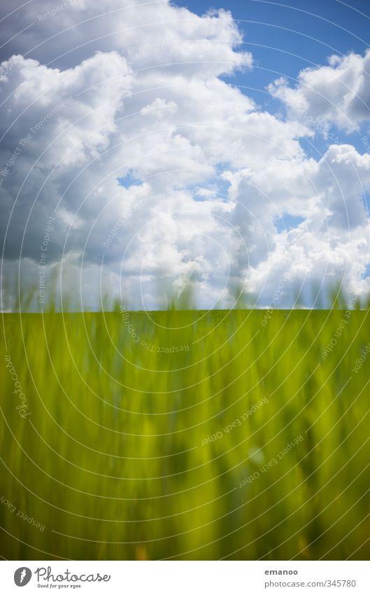 Grasland Umwelt Natur Landschaft Pflanze Luft Himmel Wolken Horizont Frühling Sommer Klima Wetter Grünpflanze Park Wiese Feld blau grün Wachstum grasgrün Halm