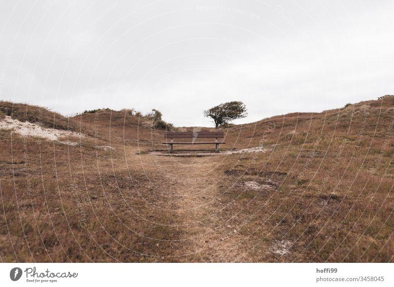 Bank auf einer Düne mit windschiefem Baum Sitzbank Dünengras Dünenkamm Wind Westwind Gras Landschaft Nordsee Strand Menschenleer Küste Meer