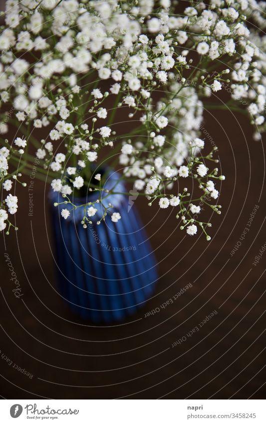 Schleierkraut in blauer Vase auf braunem Tisch. Dekoration & Verzierung Blüten Blume weiß Textfreiraum zart zuhause Blühend schön Gypsophila Pflanze