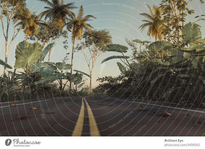 Straße im Dschungel mit gelber Linie in der Mitte Fahrspur Regie Umwelt tropisch Laubwerk Sommer urban Vegetation Bäume Linien Perspektive Zentrum Boden