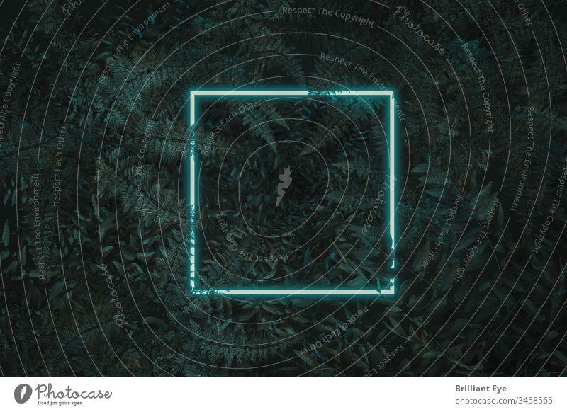 weißes quadratisches Neonlicht mit Farn und Bowenia-Pflanzen. Flachbauweise mit minimalem Naturstilkonzept 3d abstrakt Hintergrund Postkarte farbenfroh Konzept