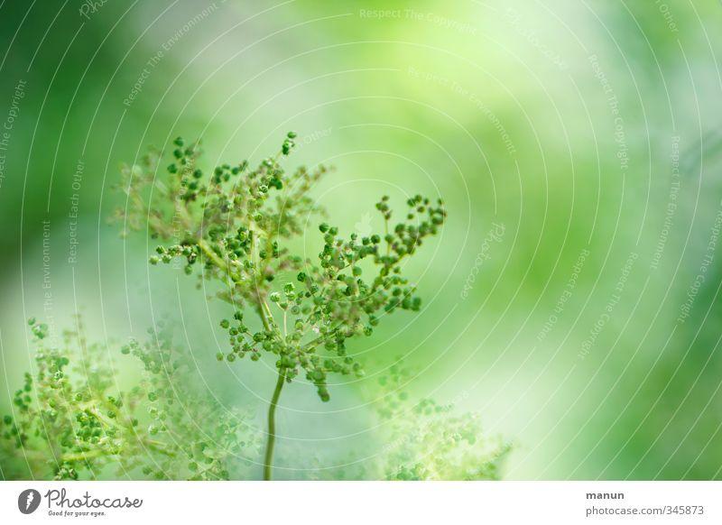 grün Natur grün Sommer Pflanze Frühling Wachstum Grünpflanze Wildpflanze Frühlingsgefühle hellgrün Frühlingsfarbe