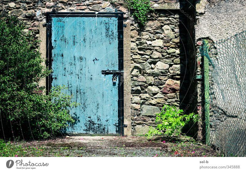 BLAU Häusliches Leben Garten Natur Pflanze Sträucher Efeu Gebäude Architektur Mauer Wand Tür Stein Beton Schloss alt Armut natürlich blau grün Traurigkeit
