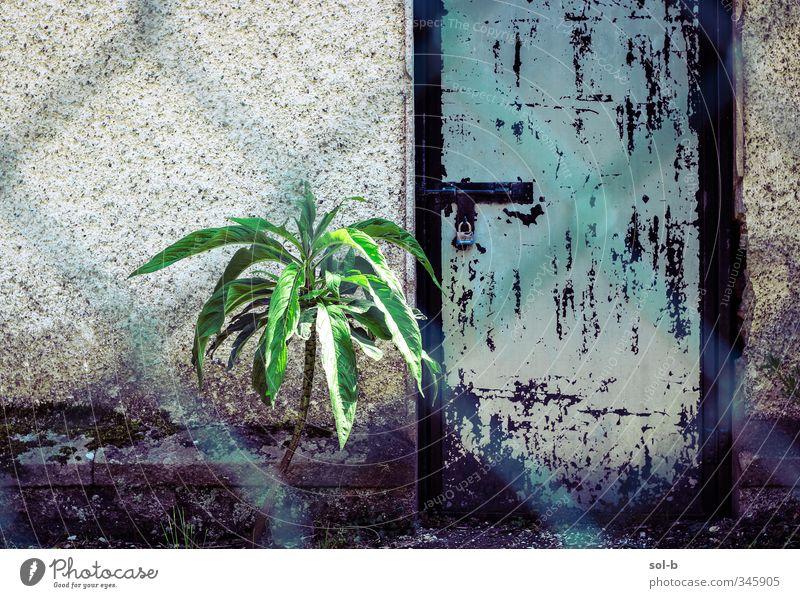 Werkschutztür. Pflanze Gebäude Mauer Wand Tür Schloss alt Armut einzigartig kalt Neugier blau grün türkis Vorsicht Traurigkeit Einsamkeit Angst Zukunftsangst