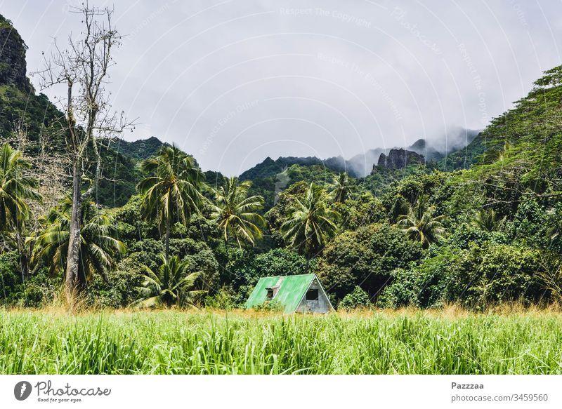 Eigenheim in Rarotonga social distancing zuhause bleiben Hütte Fernreise Südsee Eremit Einsiedler Dschungel Natur Idylle Haus Cook Inseln Versteck Palme