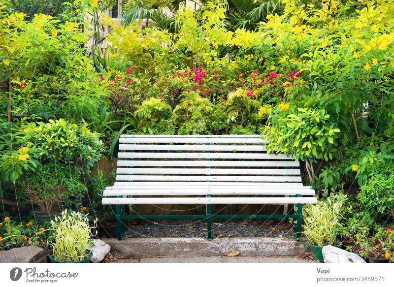 Bank im grünen tropischen Garten Park leer Natur Laubwerk Frühling Sommer Handfläche Blütezeit natürlich Blume Saison Sitz altehrwürdig frisch Farbe schön
