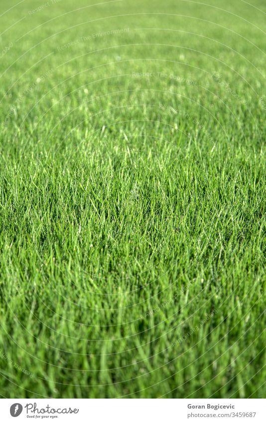 Nahaufnahme von grünem Gras Natur Feld Frühling Wiese Pflanze natürlich Rasen Sommer Hintergrund Umwelt Frische frisch Wachstum Land abstrakt im Freien Muster