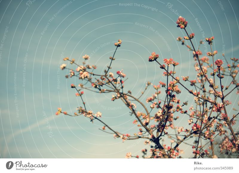Frühlingszart. Himmel Natur schön Sommer Pflanze Baum Umwelt Blüte Garten natürlich Wachstum ästhetisch Blühend Lebensfreude Duft
