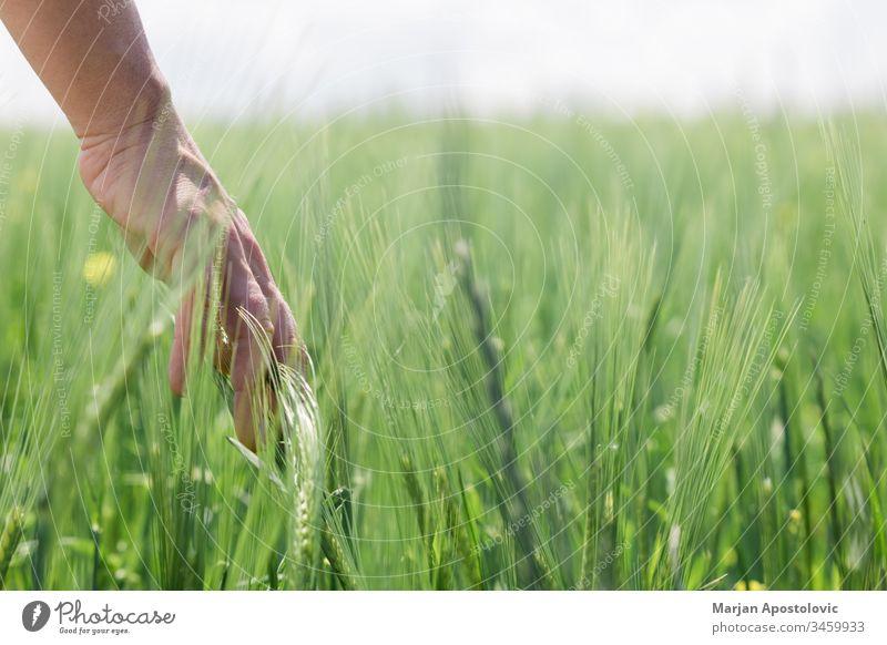 Nahaufnahme einer Hand, die auf dem Feld hohes Gras berührt Ackerbau Hintergrund Pflege Konzept Erhaltung Tag filigran Entwicklung Erde Ökologie Umwelt