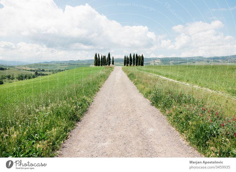 Wunderschöne toskanische Landschaft mit Zypressen im Frühling Hintergrund blau Wolken Umwelt umgebungsbedingt Europa Bauernhof Ackerland Feld Gras grün Hügel