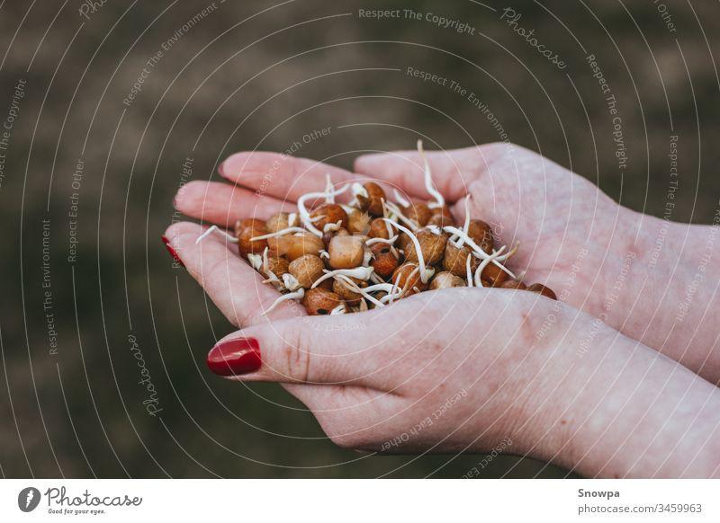 Mädchen hält frische Erbsensprossen in ihren Handflächen lecker Beteiligung Gesundheit jung Ernährung Lebensmittel natürlich Bestandteil Mahlzeit organisch Diät