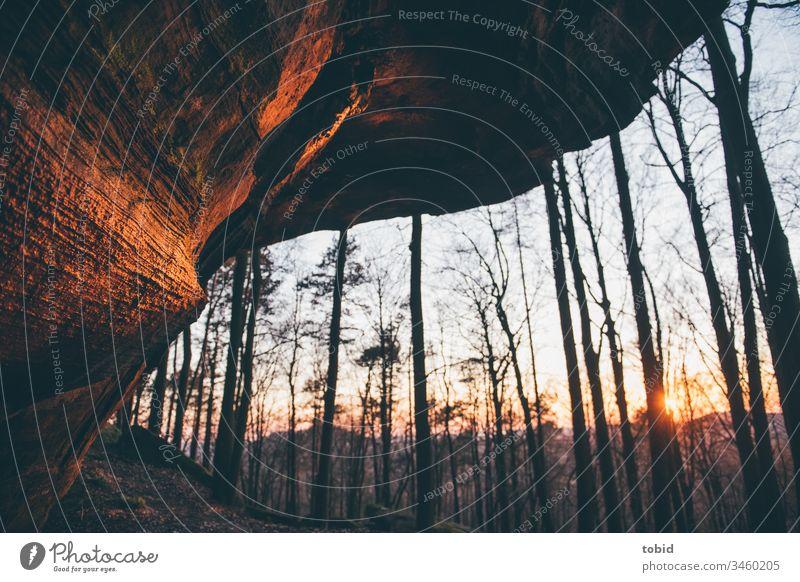 Bunter Sandstein im idyllischen Abendlicht Natur Felsen Felsvorsprung Bäume Sonne Sonnenlicht Idylle Farbfoto Landschaft Schönes Wetter Horizont Dämmerung