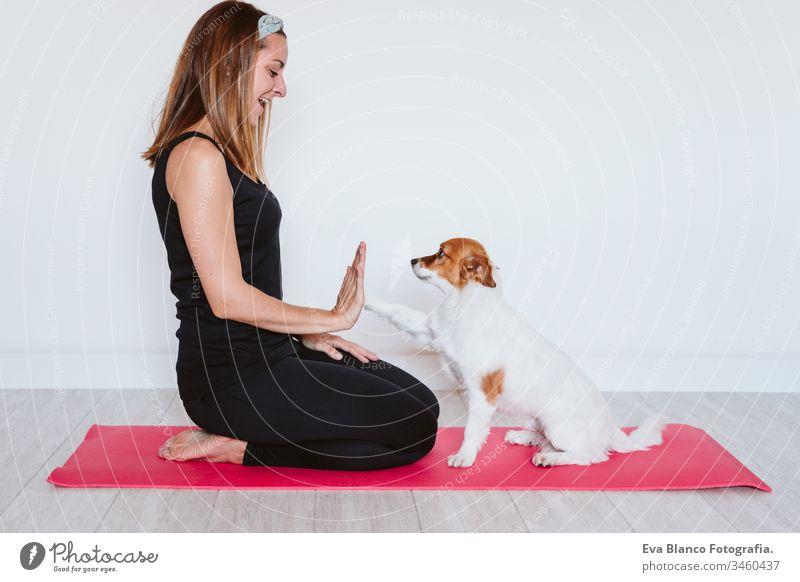 süßer kleiner Jack-Russell-Hund, der mit seiner Besitzerin zu Hause auf einer Yogamatte liegt. Gesunder Lebensstil im Haus Frau heimwärts Unterlage Haustier