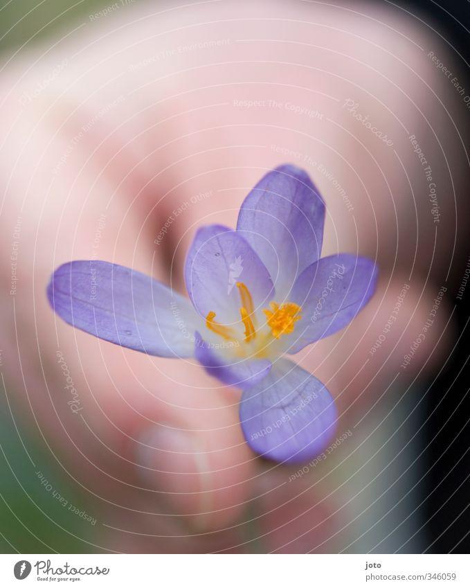 für dich Natur Pflanze Blume Liebe Frühling Glück Garten Freundschaft Geburtstag Geschenk zart violett Wachsamkeit Duft Verliebtheit danke schön