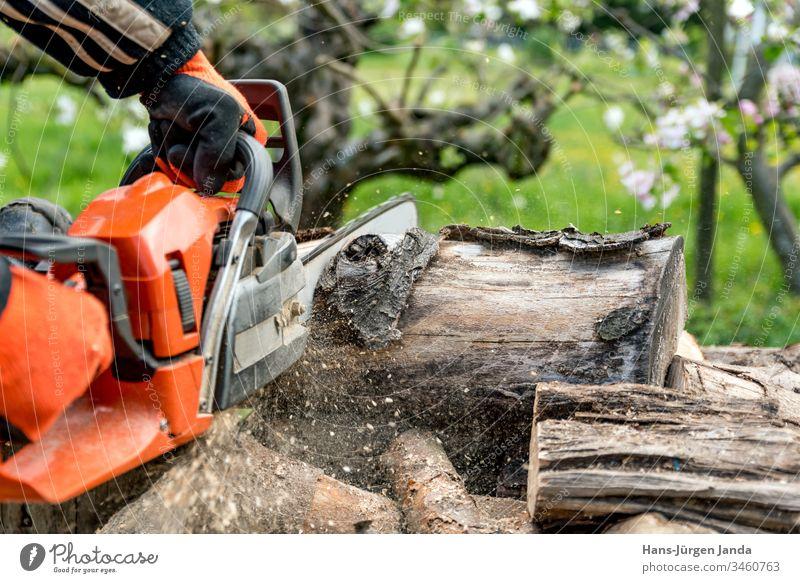 Mann sägt Brennholz mit einer roten Kettensäge Holzsäge Holzspäne Säge Feuerstelle Holzbearbeitung Ofen Stürze Baum Unfallverhütung Brennstoff Industrie