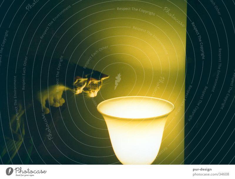 pünktchen_und_anton_im_licht Katze Wärme Wohnzimmer