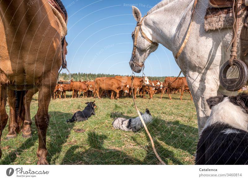 Rinder, Hunde und Pferde legen eine Pause ein an einem heißen Sommertag in der Pampa Tier Wiese Himmel Schönes Wetter Gras Natur Tag grün Landschaft