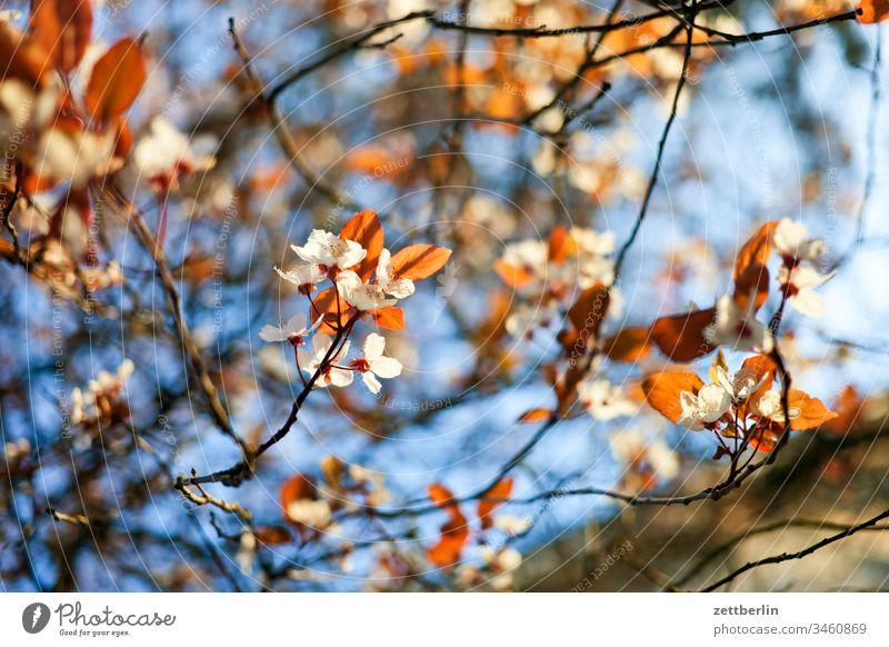 Blüten im Park ast außen baum blume blühen blüte erholung ferien garten himmel kleingarten kleingartenkolonie menschenleer natur pflanze ruhe schrebergarten